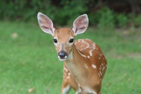deer-2264354_960_720